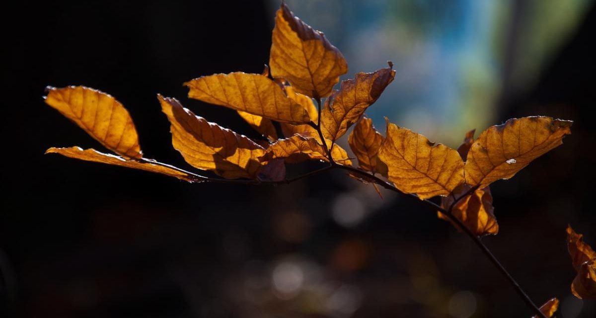 4 základní tipy proti podzimní viróze