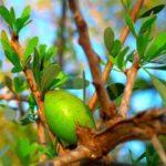 Marocké zlato – arganový olej