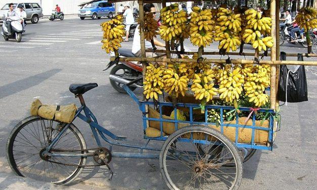Proč si zamilovat banány